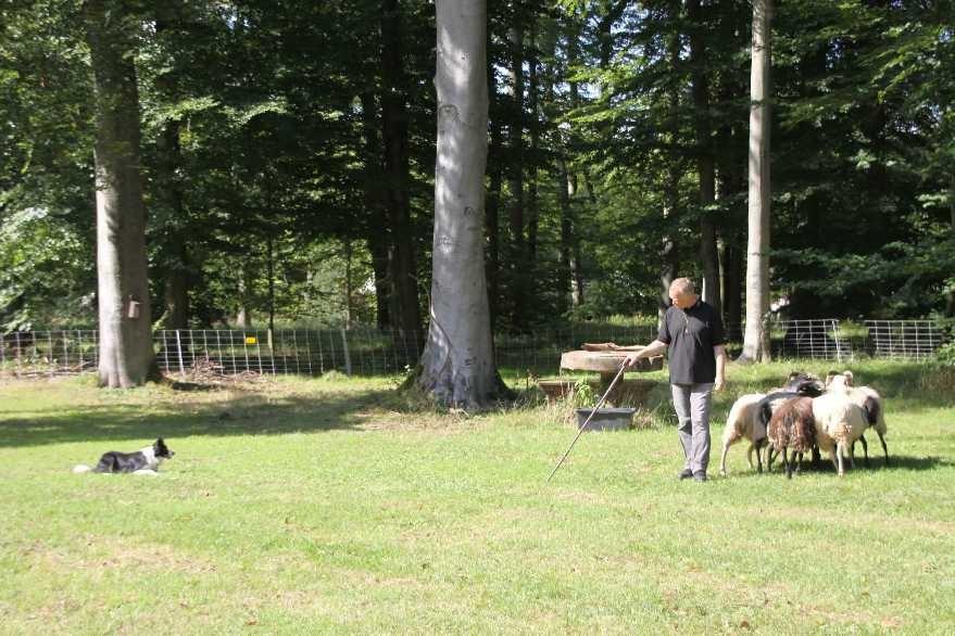 229_0399_17 Sept 2010_Gartenfest_Border-Collies