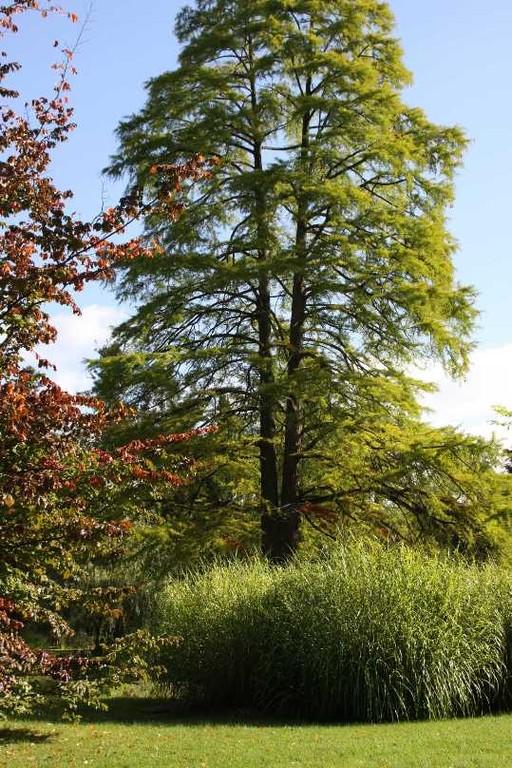 013_0038_17 Sept 2010_Gartenfest_Schlosspark