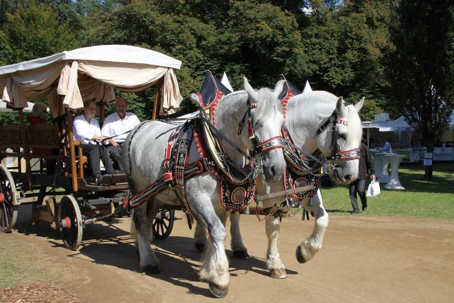 181_0323_17 Sept 2010_Gartenfest_Percheron-Pferde