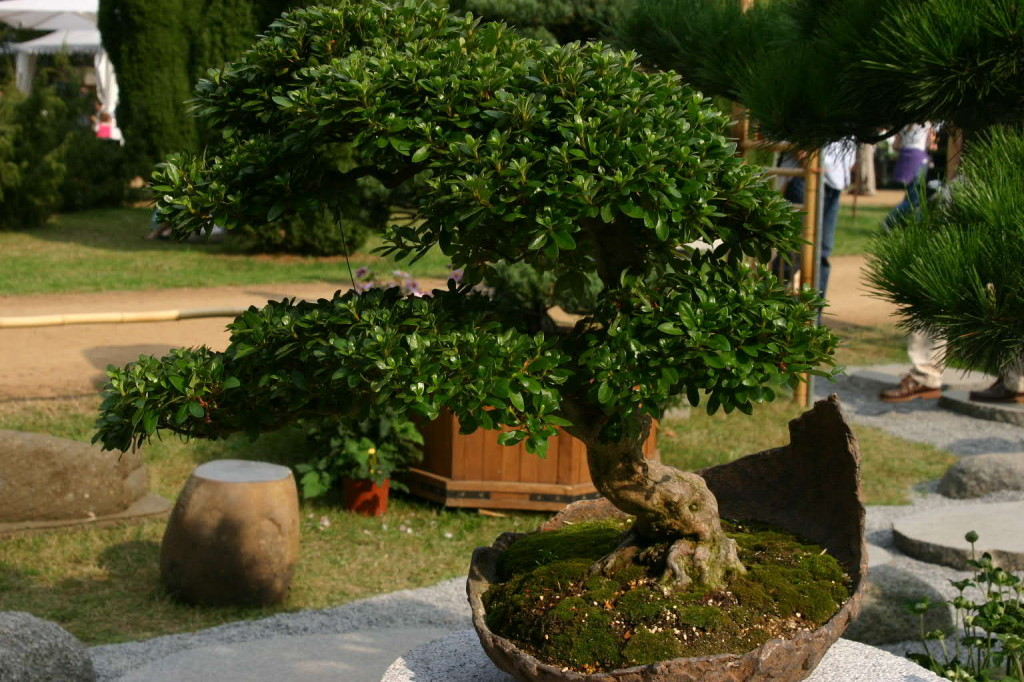 168_0374_20 Sept 2009_Gartenfest_Aussteller_Bonsai