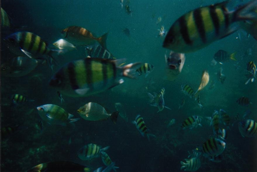 beim Schnorcheln - Fische