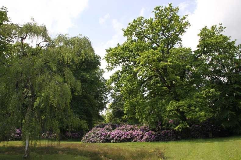 0010_19 Mai 2012_Rhododendron_Schlosspark