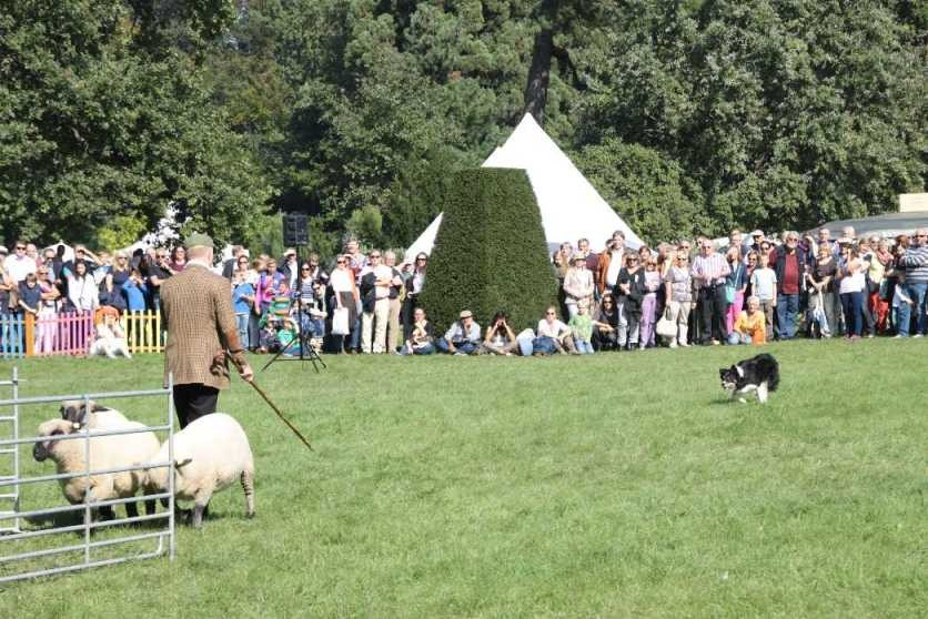 0110_22 Sept 2013_Gartenfest_Bordercollies & Heidschnucken