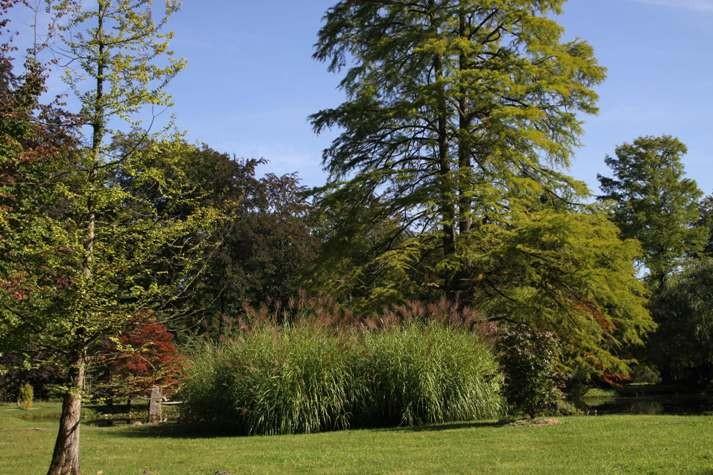 017_0069_16 Sept 2011_Gartenfest_Schlosspark