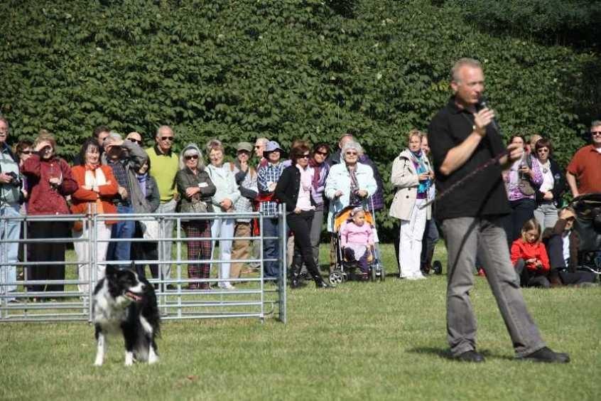 266_0597_19 Sept 2010_Gartenfest_Border-Collies