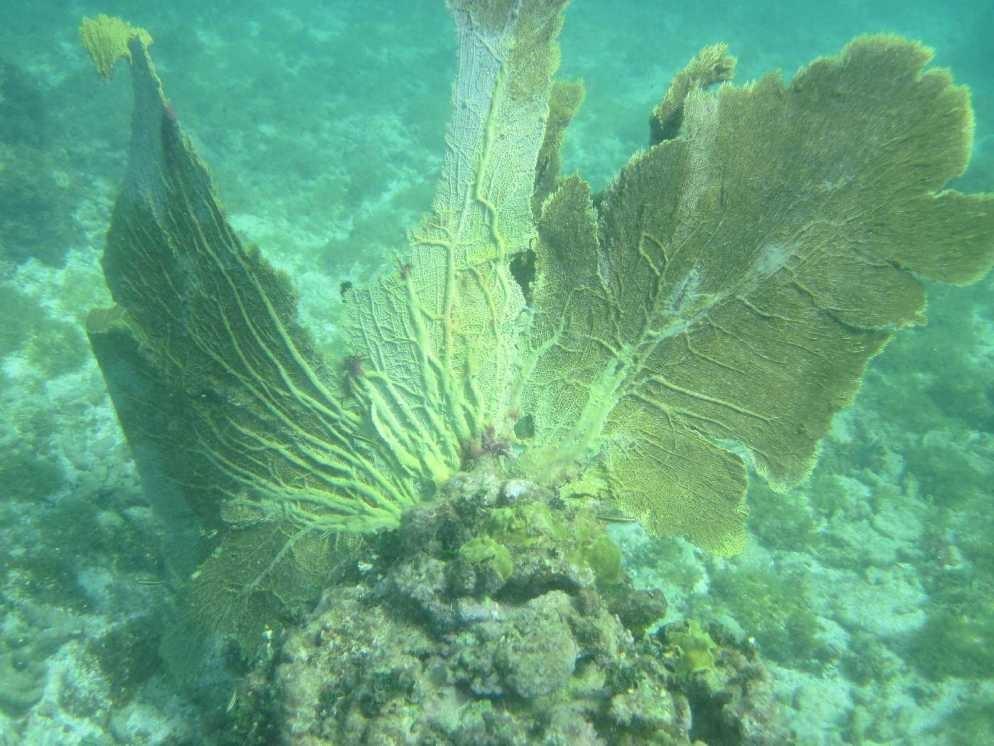 3099_02 DEZ 2013_Grenada_Shadowfax-Segeltörn_unter Wasser