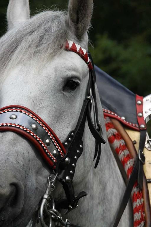161_0150_17 Sept 2010_Gartenfest_Percheron-Pferde