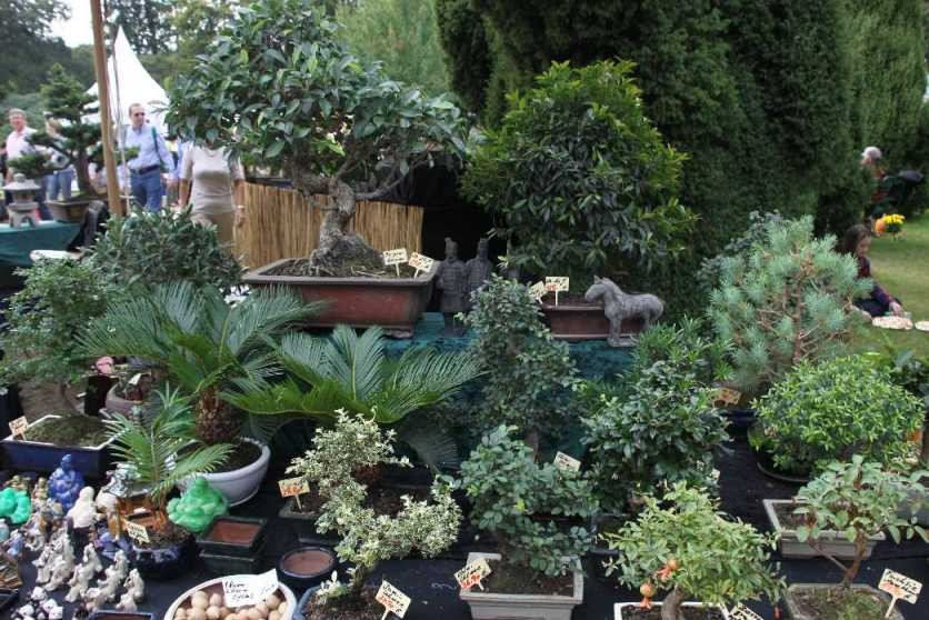 0242_22 Sept 2013_Gartenfest_Aussteller_Bonsai