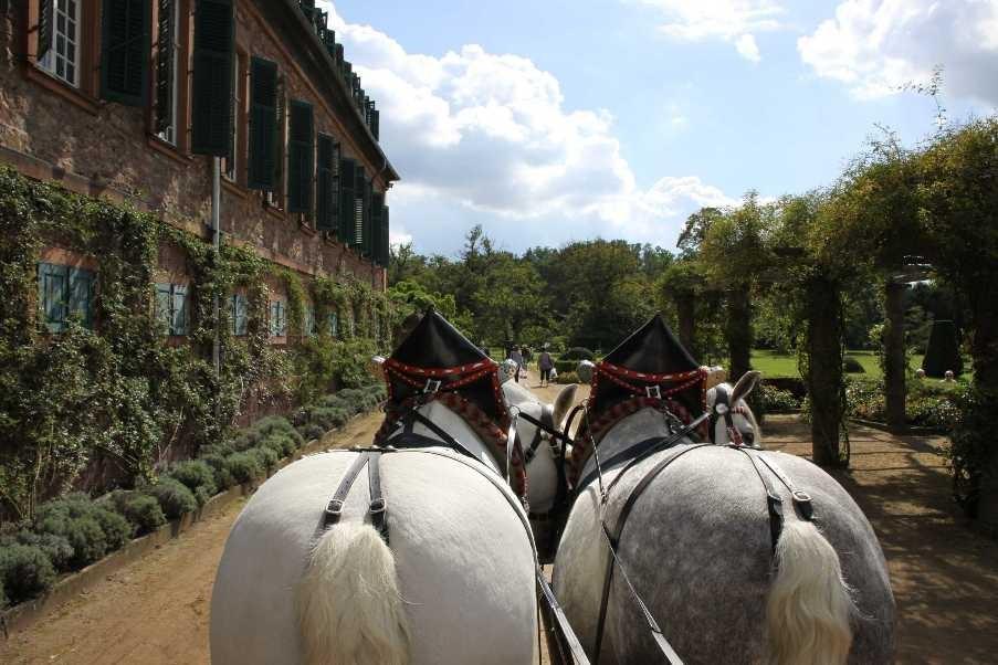 167_0256_17 Sept 2010_Gartenfest_Schloss Wolfsgarten_Percheron-Pferde