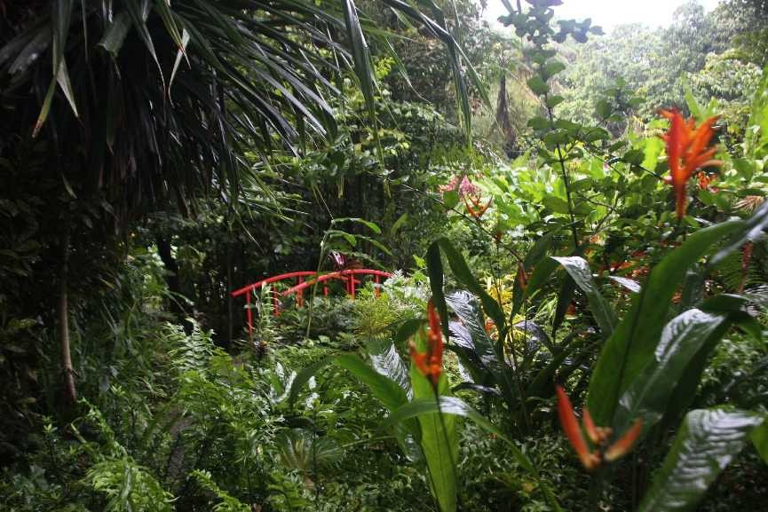 4341_06 DEZ 2013_St-Lucia_Soufriere_Botanical Garden