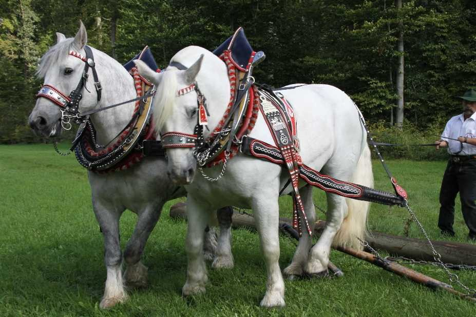 153_0135_17 Sept 2010_Gartenfest_Percheron-Pferde