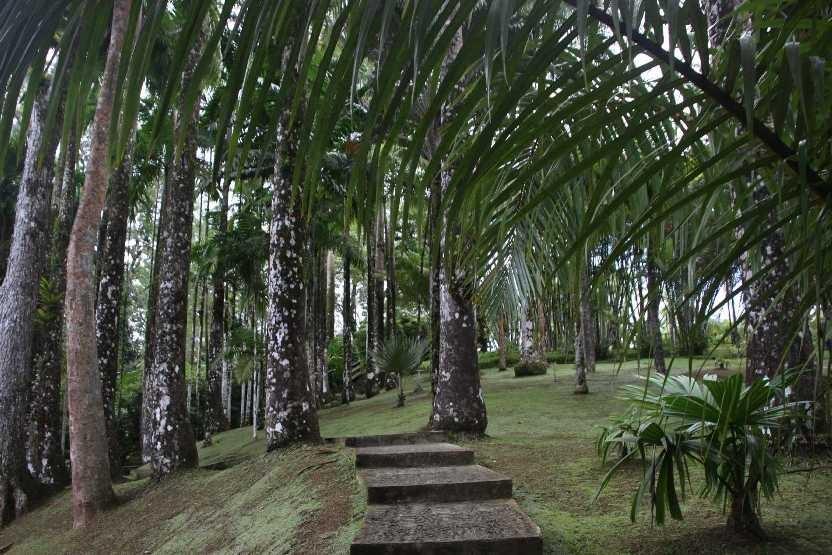 4012_05 DEZ 2013_Martinique_Jardin de Balata