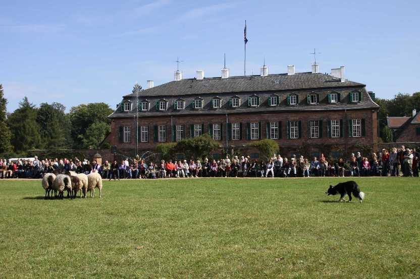 268_0602_19 Sept 2010_Gartenfest_Schloss Wolfsgarten_Border-Collies