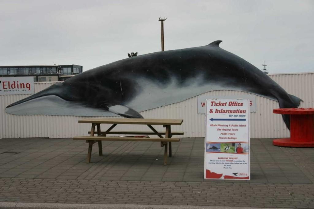 Bild 0553 - Island / Reykjavik, Whale Watching