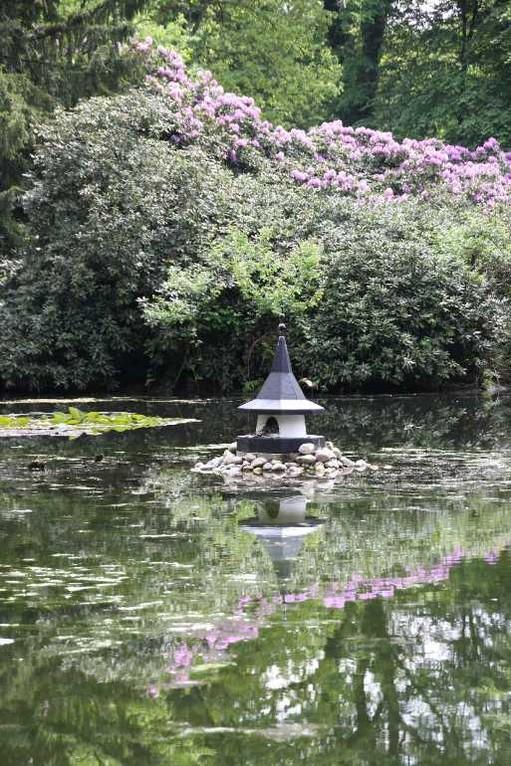 0155_19 Mai 2012_Rhododendron_Schlosspark_Teich