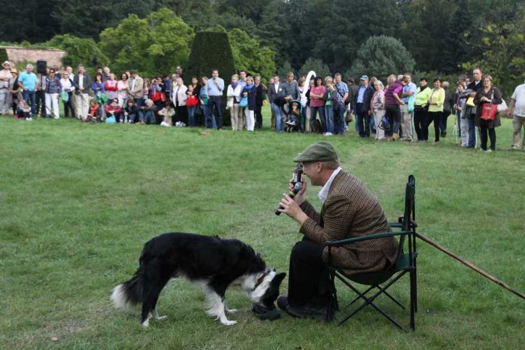 0290_22 Sept 2013_Gartenfest_Bordercollies & Heidschnucken