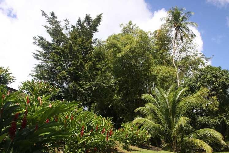2339_29 NOV 2013_Martinique_Allradabenteuer