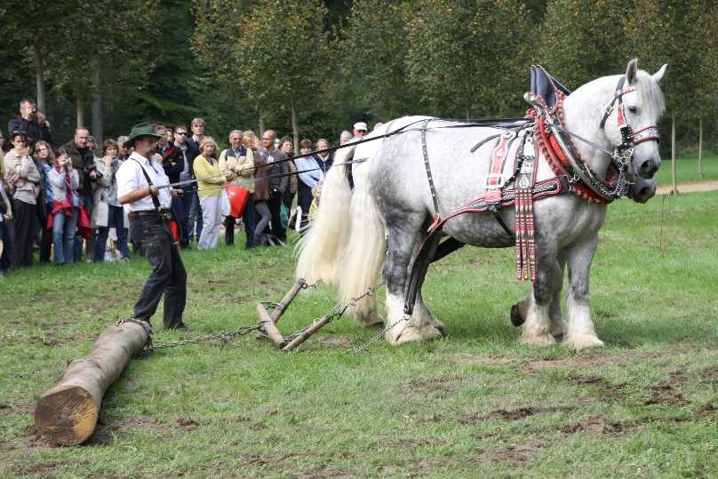 213_0754_19 Sept 2010_Gartenfest_Percheron-Pferde