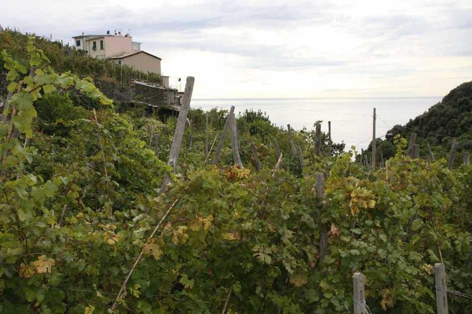 0292_07 Okt 2013_Cinque-Terre_Corniglia