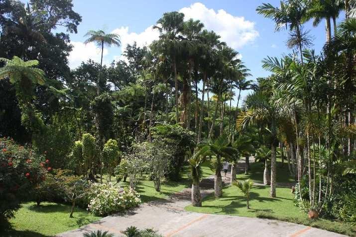 3978_05 DEZ 2013_Martinique_Jardin de Balata