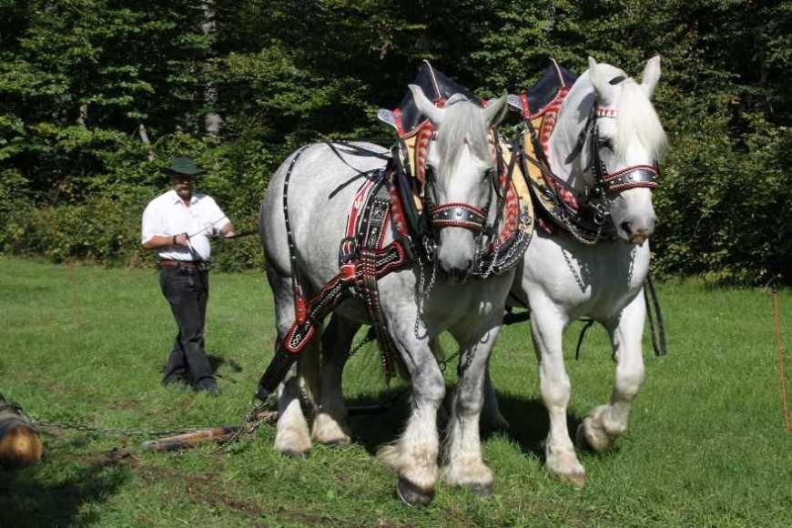 192_0375_17 Sept 2010_Gartenfest_Percheron-Pferde