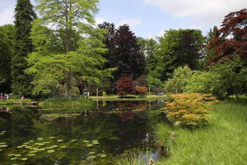 0092_19 Mai 2012_Rhododendron_Schlosspark_Teich