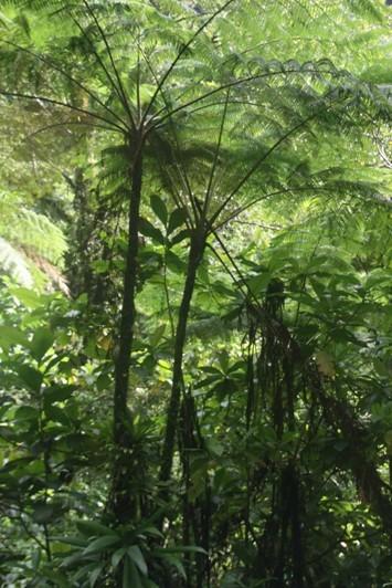 0936_25 NOV 2013_Dominica_Trafalgar Falls