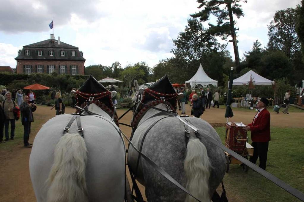 169_0263_17 Sept 2010_Gartenfest_Schloss Wolfsgarten_Percheron-Pferde