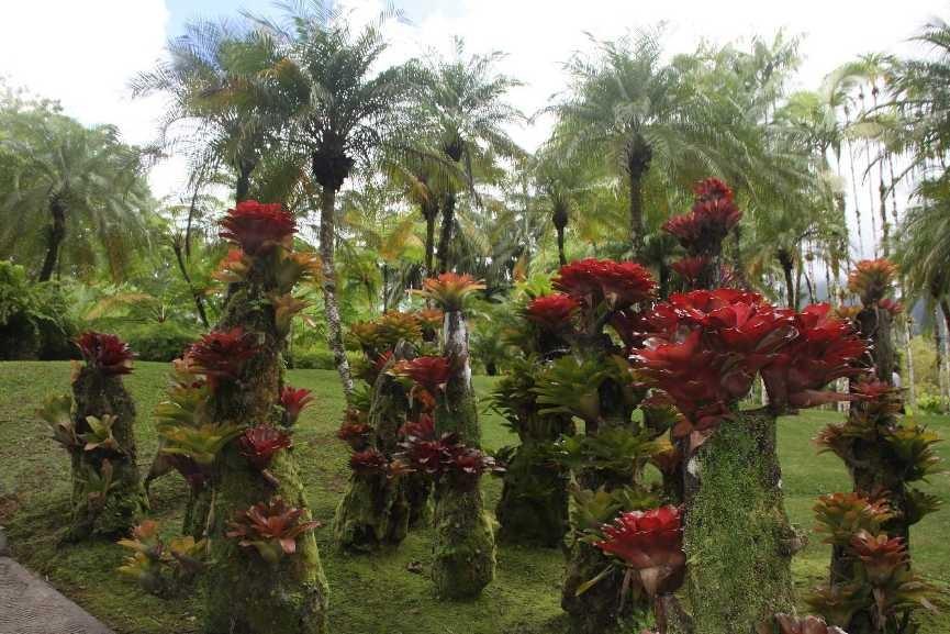 4003_05 DEZ 2013_Martinique_Jardin de Balata