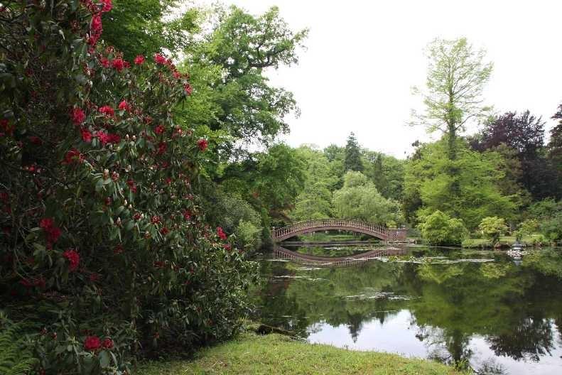 0047_19 Mai 2012_Rhododendron_Schlosspark_Teich_Brücke