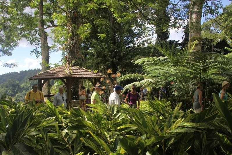 4052_05 DEZ 2013_Martinique_Jardin de Balata