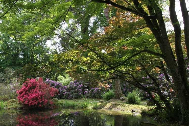 0105_19 Mai 2012_Rhododendron_Schlosspark_Teich_Blüte