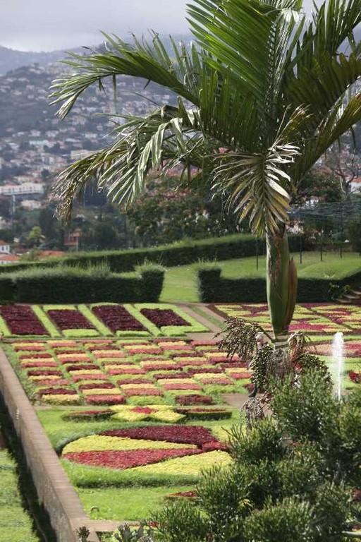 1249_14 Okt 2010_Madeira_Monte_Jardim Botanico