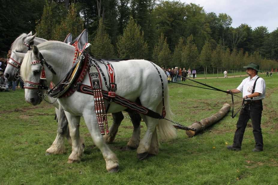 212_0751_19 Sept 2010_Gartenfest_Percheron-Pferde