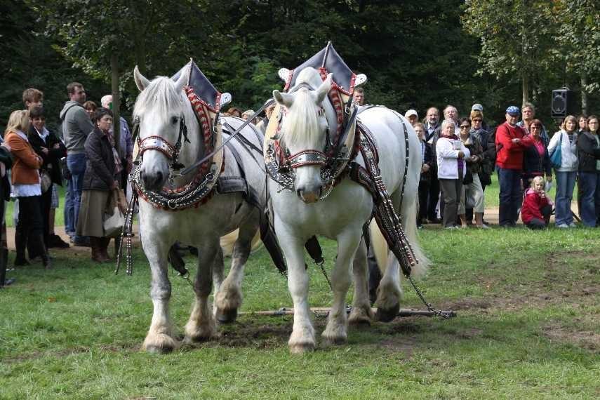198_0722_19 Sept 2010_Gartenfest_Percheron-Pferde