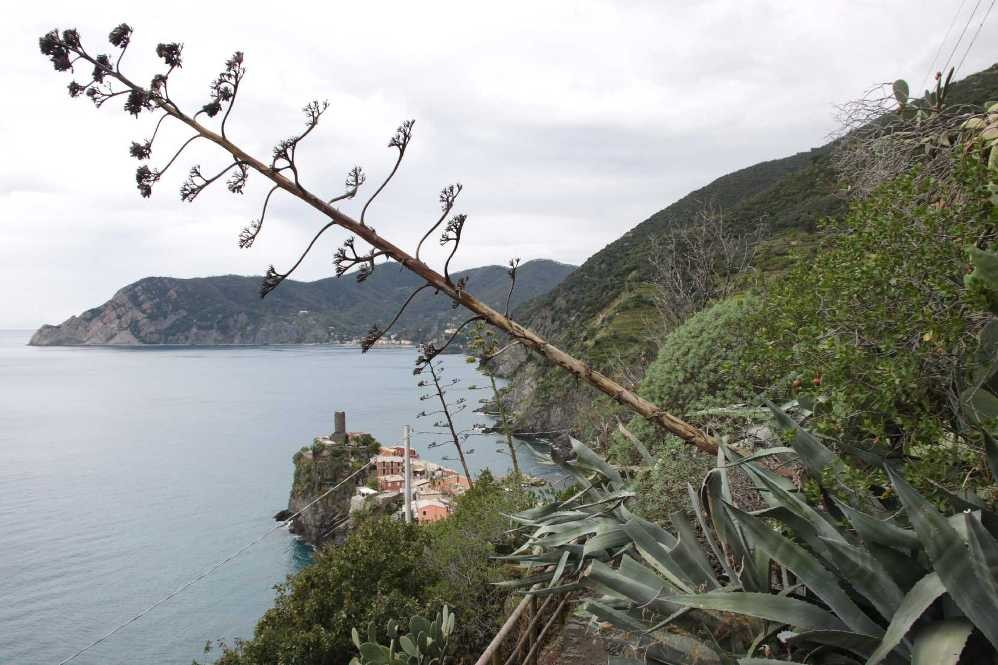 0262_07 Okt 2013_Cinque-Terre_Vernazza_Agave