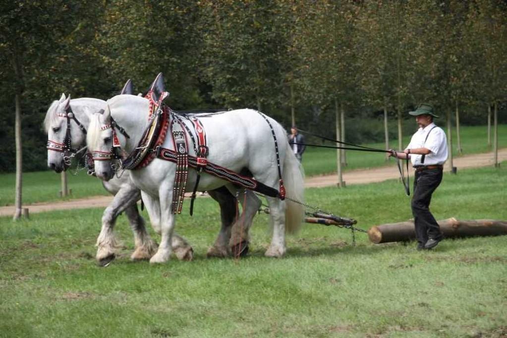 208_0744_19 Sept 2010_Gartenfest_Percheron-Pferde