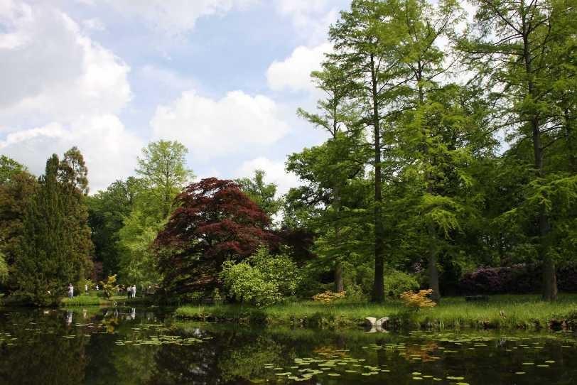 0111_19 Mai 2012_Rhododendron_Schlosspark_Teich