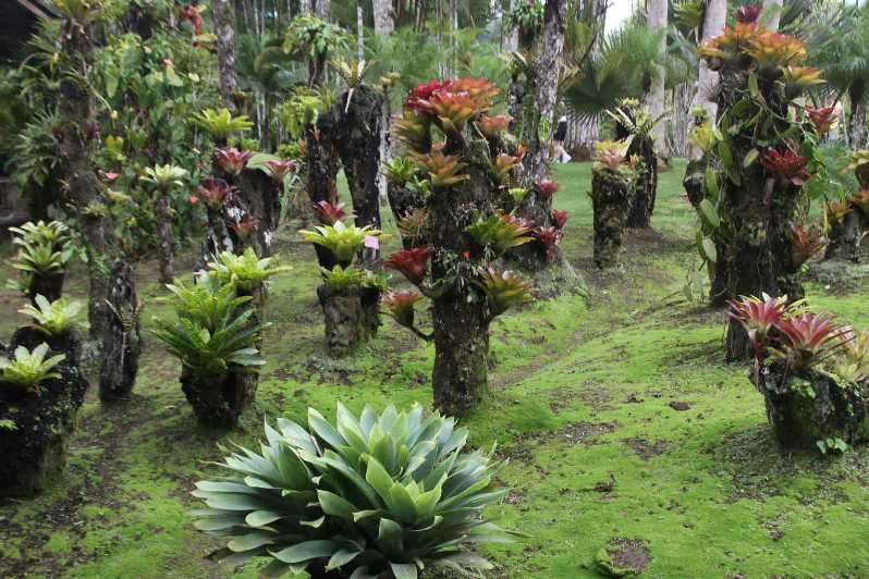 3994_05 DEZ 2013_Martinique_Jardin de Balata