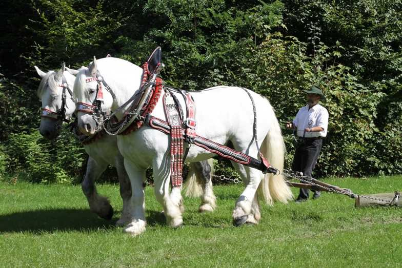 186_0355_17 Sept 2010_Gartenfest_Percheron-Pferde