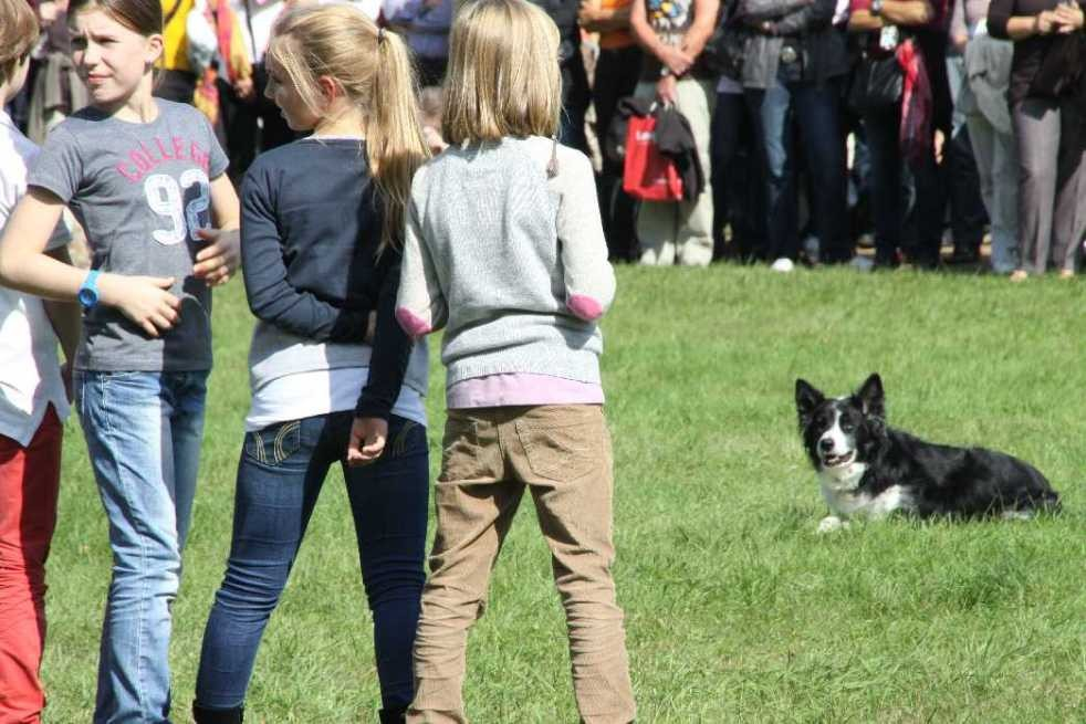 0117_22 Sept 2013_Gartenfest_Bordercollies & Heidschnucken