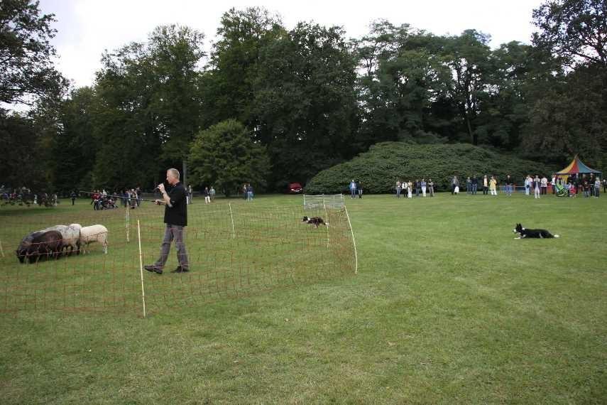 245_0529_18 Sept 2010_Gartenfest_Border-Collies