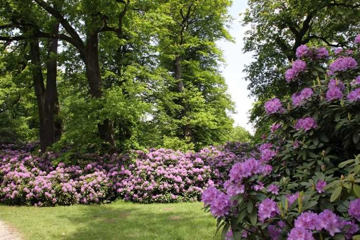 0044_19 Mai 2012_Rhododendron_Blüte