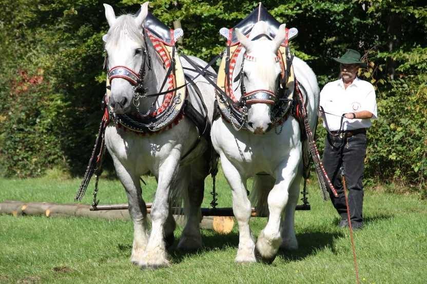 190_0363_17 Sept 2010_Gartenfest_Percheron-Pferde
