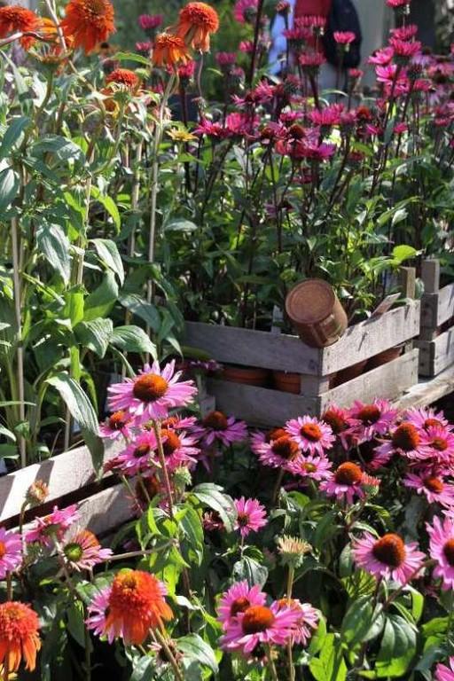 066_0213_16 Sept 2011_Gartenfest_Aussteller