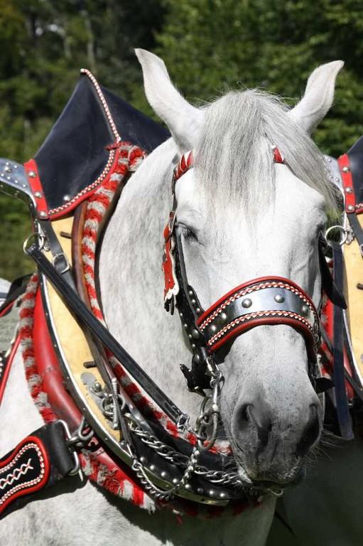 182_0344_17 Sept 2010_Gartenfest_Percheron-Pferde