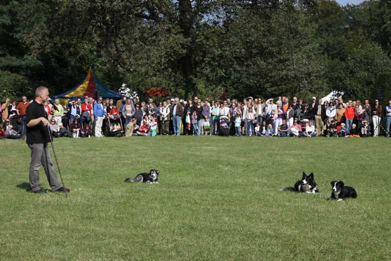 270_0607_19 Sept 2010_Gartenfest_Border-Collies