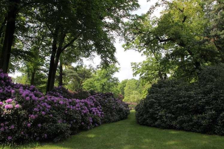 0026_19 Mai 2012_Rhododendron_Schlosspark_Brücke