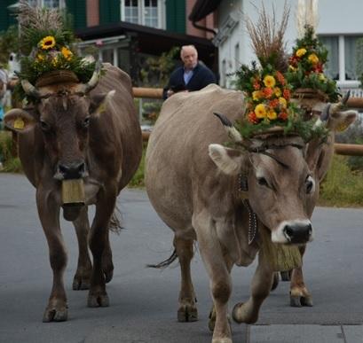 """Wer Kühe """"körpersprachlich"""" deuten kann, spürt den Stolz und das Selbstbewusstsein der Leitkühe."""