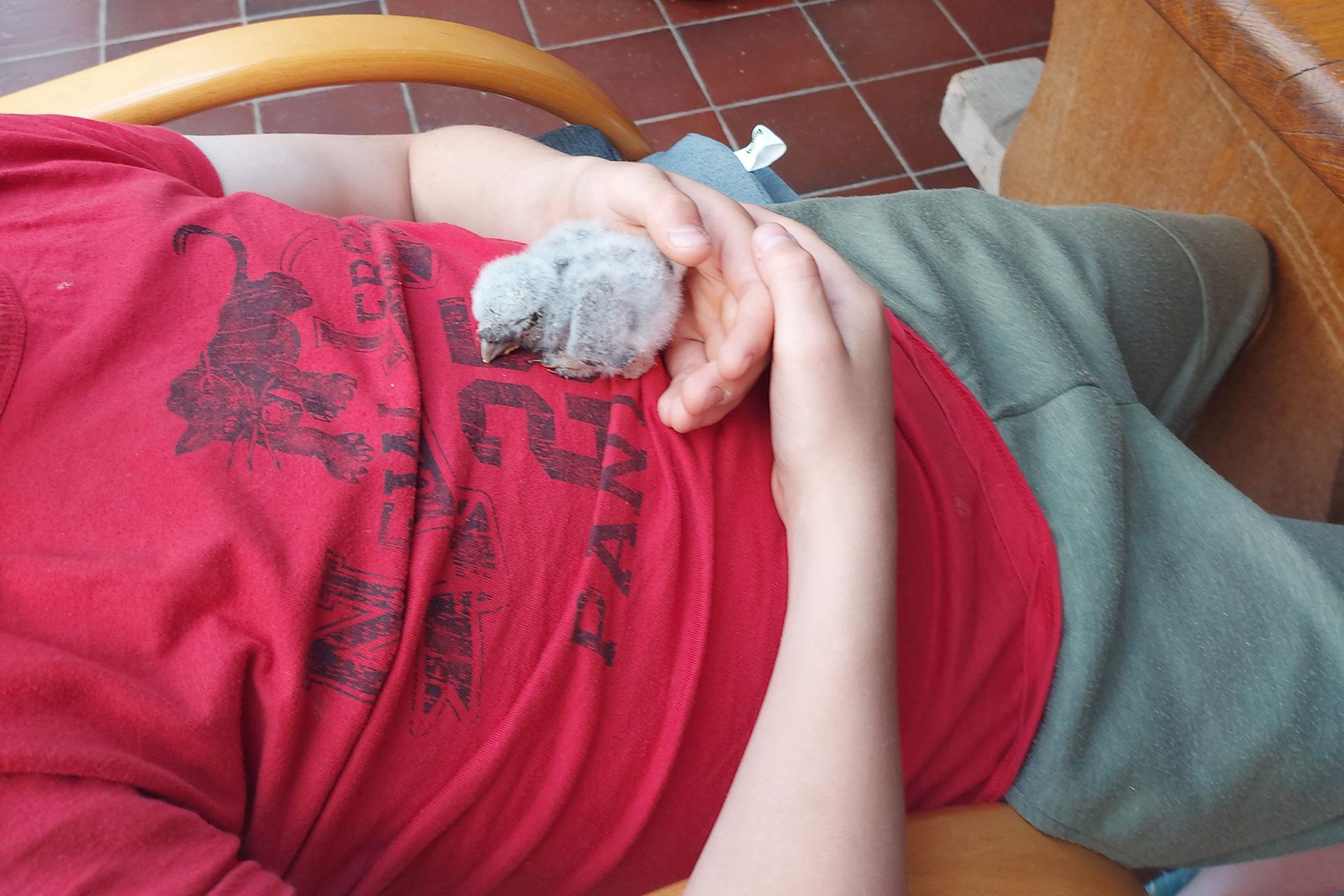 Die Steinkauz-Rettung